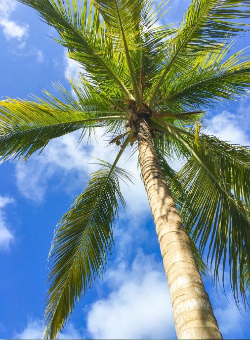 palm trees dorset
